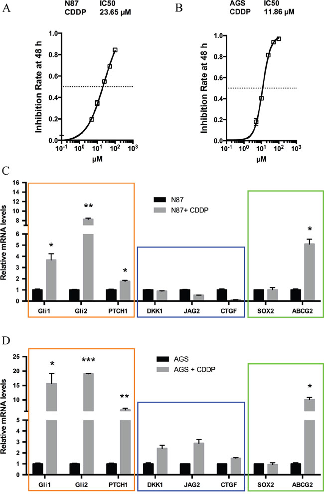 Elevated hedgehog signaling following CDDP treatment in gastric cancer cells.