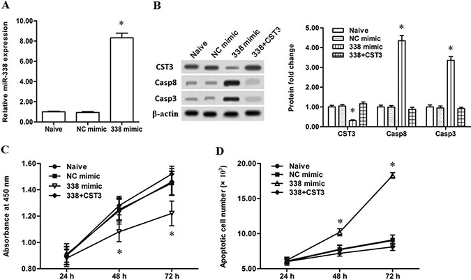 Overexpression of miR-338 attenuated the proliferation and increased the apoptosis of esophageal cancer cells.