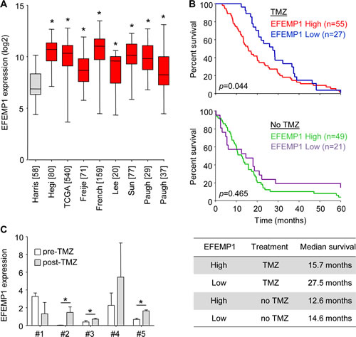 EFEMP1 expression correlates to TMZ treatment efficacy and survival in glioblastoma patients.