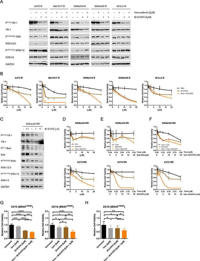 MAPK inhibitor resistant melanoma cells can be effectively targeted by RSK inhibition.