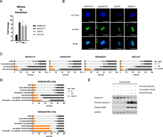 RSK inhibition induces a G2/M arrest and apoptotic cell death in resistant melanoma cells.