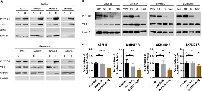 YB-1 activity is increased in vemurafenib resistant melanoma cells as a consequence of elevated MAPK/RSK signalling.
