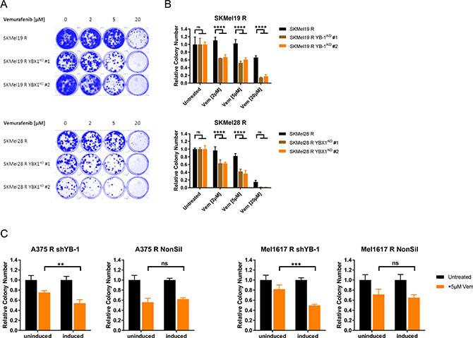 Resistant melanoma cells get re-sensitised to chronic vemurafenib treatment by targeting YB-1.