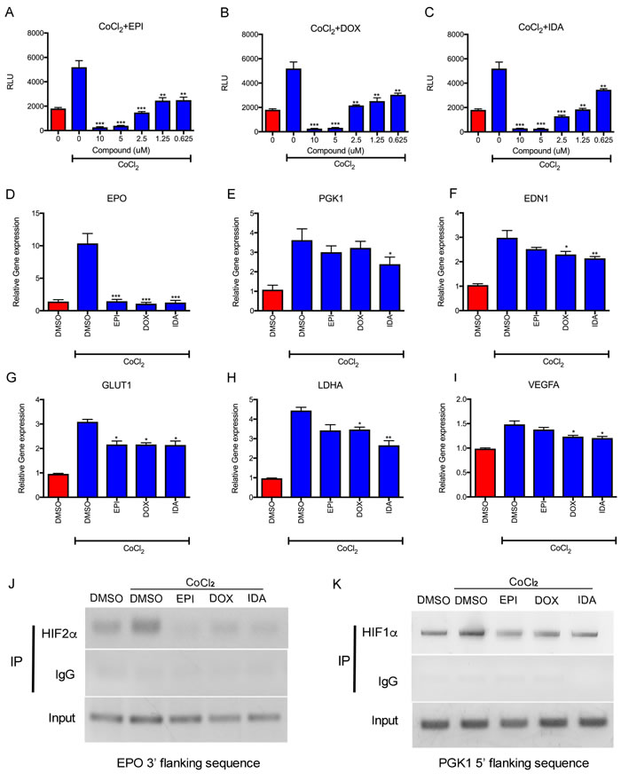 Anthracyclines suppress HIF transcriptional activity.