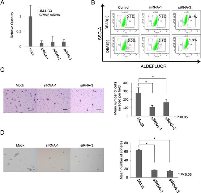 Functional analysis of GRIK2 by siRNA-mediated mRNA knockdown.