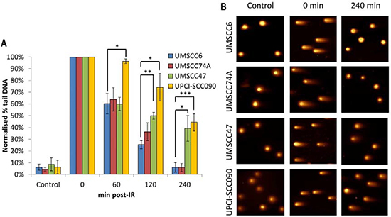 Comparative efficiency of the repair of DNA DSBs in HPV-negative and HPV-positive OPSCC cells.