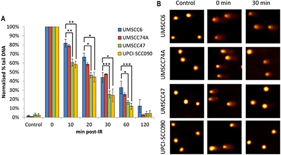 Comparative efficiency of the repair of DNA SSBs and alkali-labile sites in HPV-negative and HPV-positive OPSCC cells.