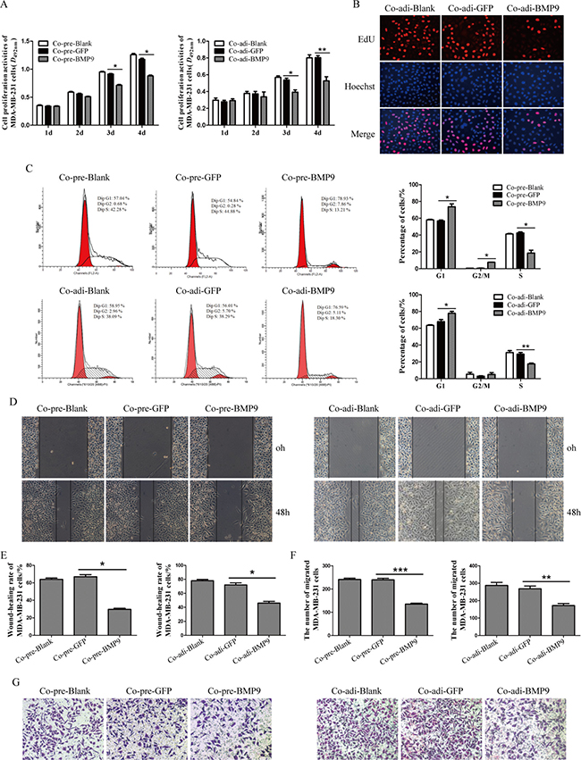 Effects of BMP9 on the proliferation and migration of MDA-MB-231 cells in the co-culture system.