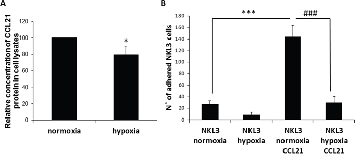 Influence of CCL21 presentation by peripheral lymph node endothelial cells and hypoxia on NK cells recognition and adhesion.