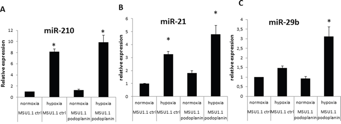 MiRNA expression modulation in MSU 1.1 fibroblasts upon PDPN expression in normoxia and hypoxia.