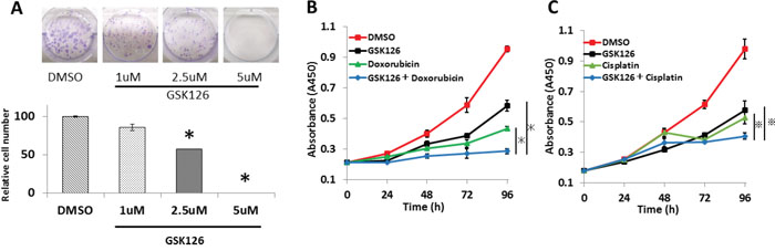 GSK126 suppresses colony formation and shows additive effects with doxorubicin and cisplatin on endometrial cancer cells.