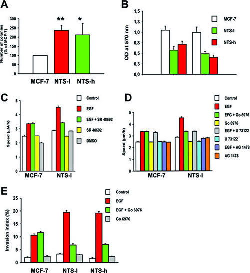 NTS autocrine and paracrine regulations enhanced oncogenic cellular effects on EGF-induced migration and invasion.