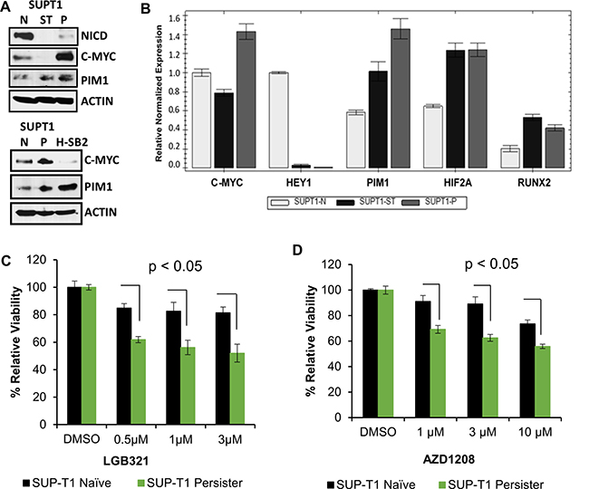 Gamma-secretase inhibitor (GSI) resistant cells overexpress PIM1 and have increased sensitivity to PIM inhibitors.