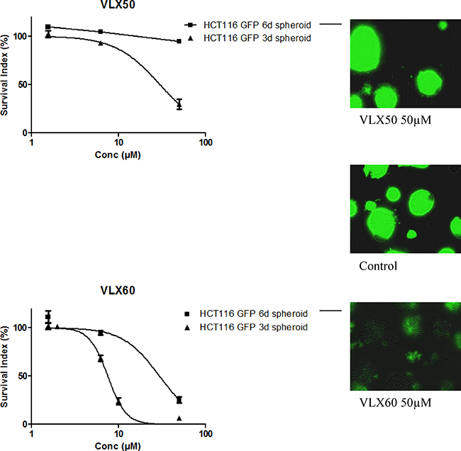 Cell survival in the FMCA assay, expressed as survival index of cell lines cultured as 3-D spheroids for 3 or 6 days and then exposed to VLX50 (upper panel) or VLX60 (lower panel) for 72 h.