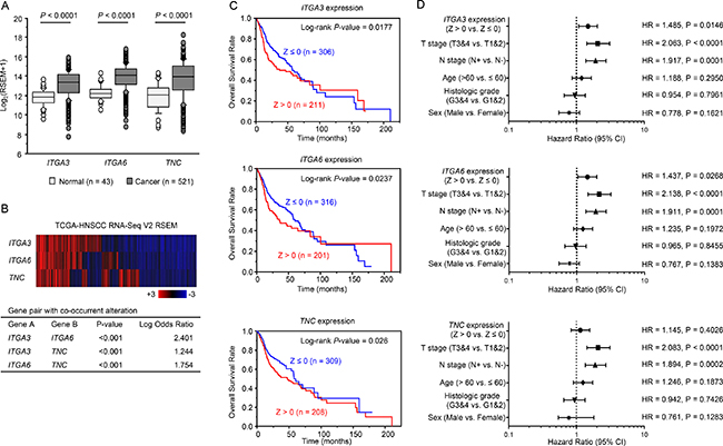 Clinical significance of three genes and miR-150-5p and miR-150-3p expression in HNSCC based on data from the TCGA database.