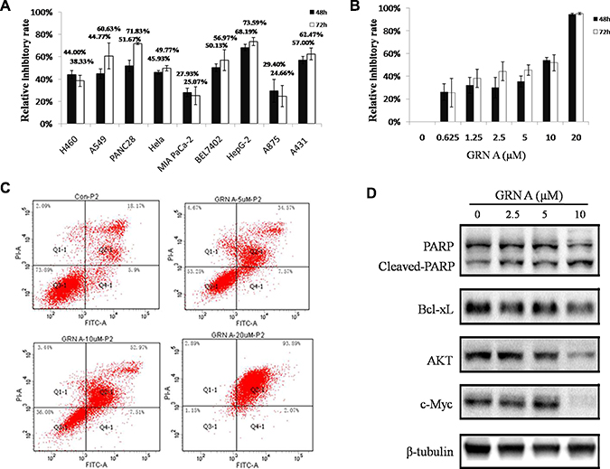 GRN A inhibited the growth and induced apoptosis in cancer cells.