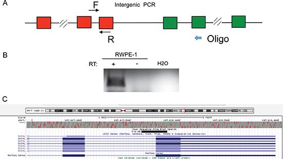 DUS4L-BCAP29 is a product of transcriptional read-through.
