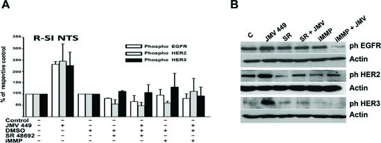 NTS regulation enhanced EGFR HER2, and HER3 activation in human lung cancer cell lines.