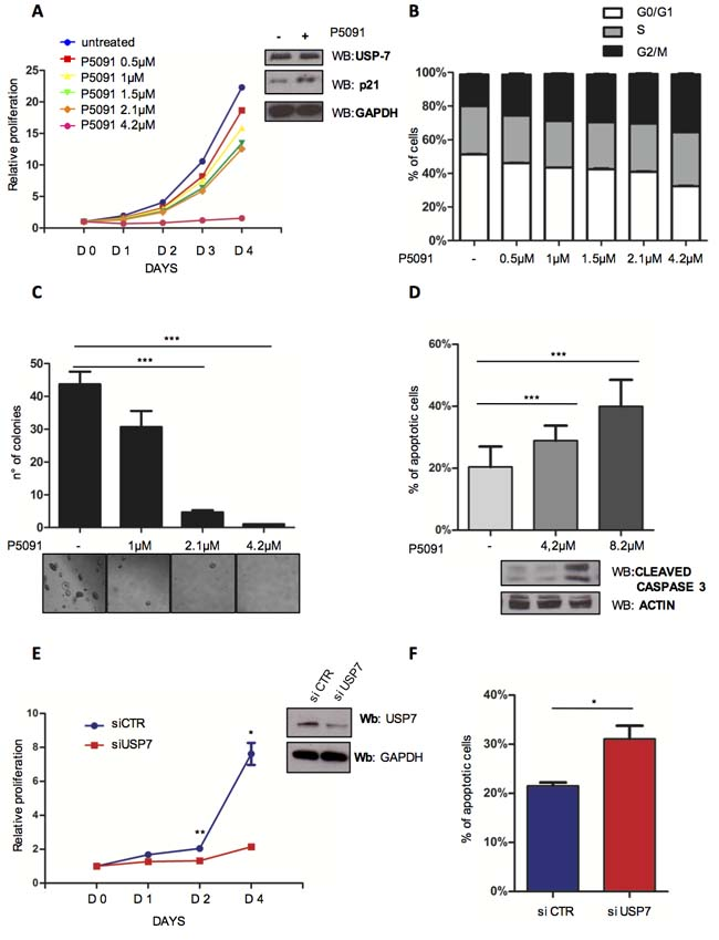 Targeting USP7 induces growth inhibition and apoptosis in CLL cell lines.
