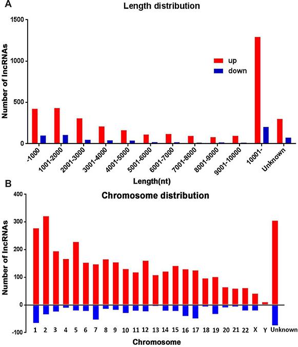 The length and chromosomes distribution of dysregulated lncRNAs.