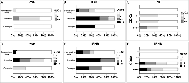The correlation among different histological subtypes and immunohistochemical markers in IPNG and IPNB.