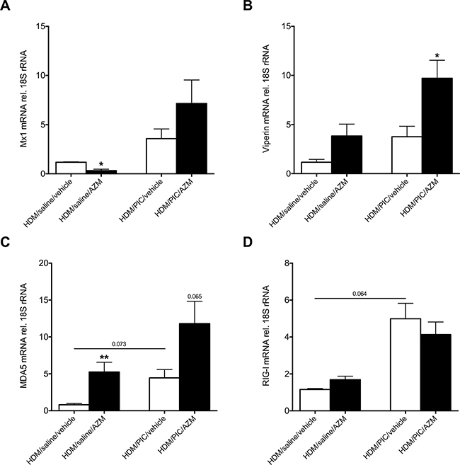 Azithromycin (AZM) augments expression of interferon-stimulated genes and the pattern recognition receptor MDA5 but not RIG-I in lung homogenates of exacerbating mice.