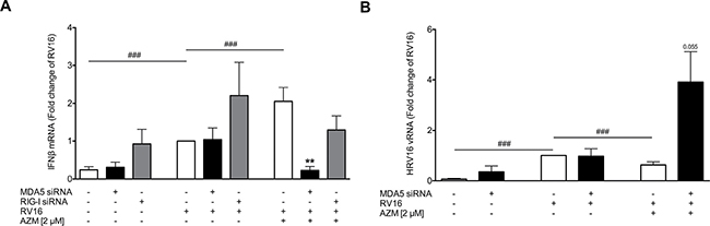 Effect of RIG-I like helicases knockdown on azithromycin (AZM)-augmented RV-induced expression of IFNβ and reduction of viral load in primary bronchial epithelial cells from asthmatic donors.