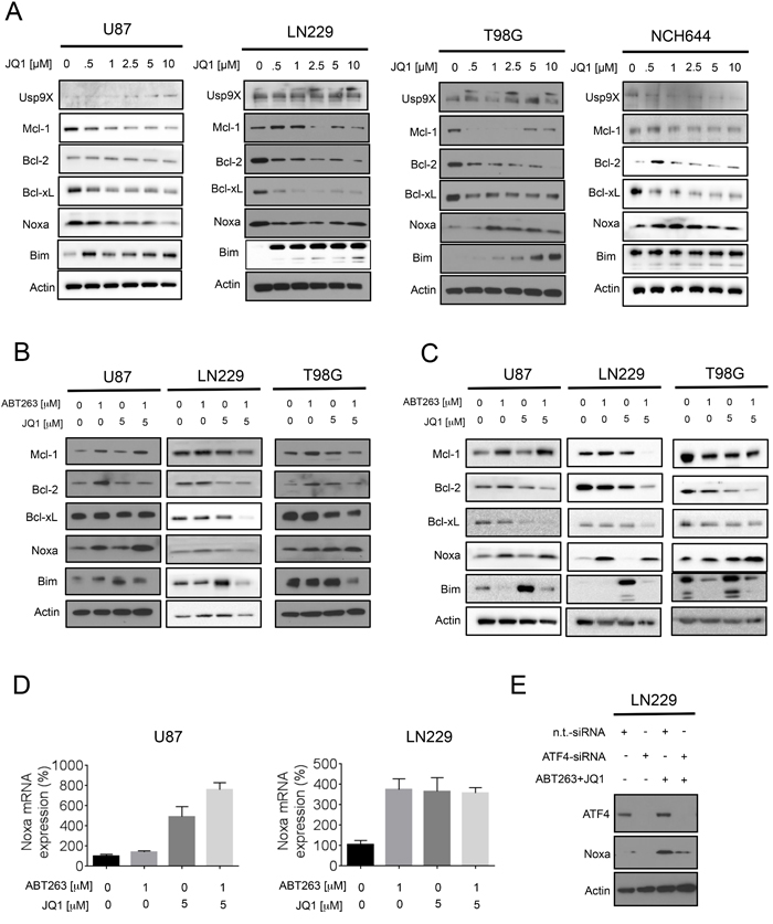 Treatment with JQ1 and the combination treatment (ABT263+JQ1) modulates protein expression of the Bcl-2 family of proteins.