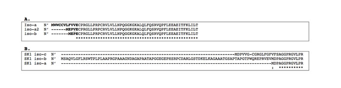 Alignment of the N-terminal amino acid sequences of the mSphK1 and hSphK1 isoforms.