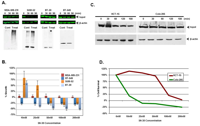 Rate of topoI degradation determines the cellular response to CPT in triple negative breast cancer cells and colorectal cancer cells.