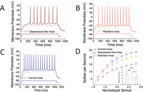 The ability to produce the sequential spikes on GABAergic neurons of the nucleus accumbens decreases in the depression-like mice, but not resilience.