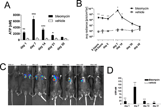 Elevated intrapulmonary nucleotide levels following bleomycin exposure in mice.