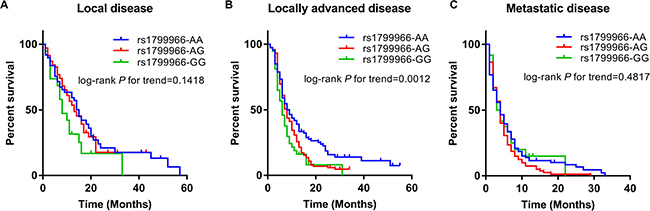Kaplan–Meier curves by rs1799966 genotypes in different disease stages.