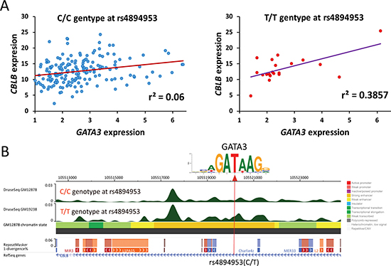 Impact of SNP genotypes on expression association between GATA3 and its downstream target.