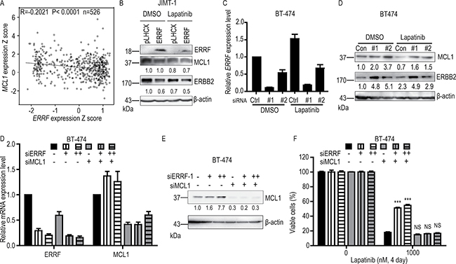 ERBB2 and MCL1 are involved in ERRF mediated sensitization to lapatinib treatment.