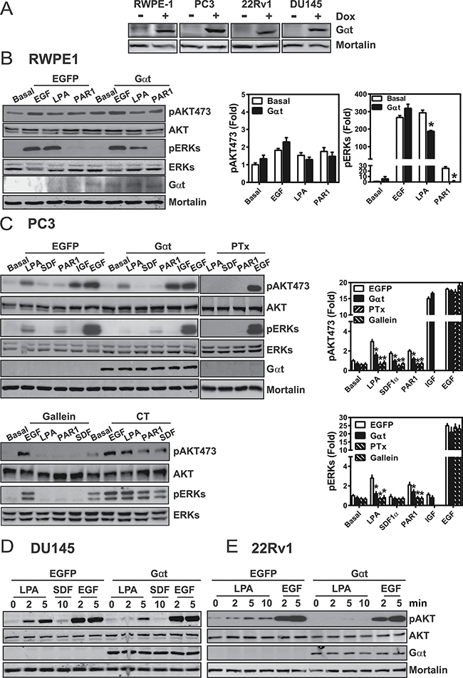 Induced Gαt expression selectively blocks GPCR-mediated signaling in prostate cancer cells.