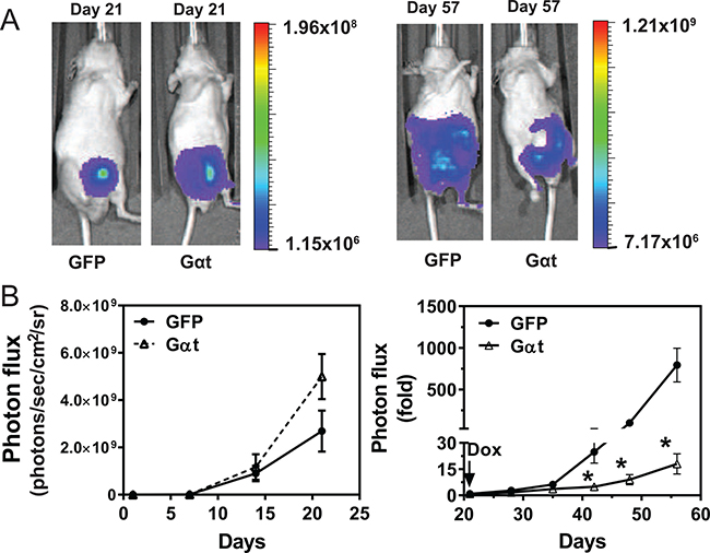 Targeting Gβγ signaling via Gαt blocks primary prostate cancer growth.