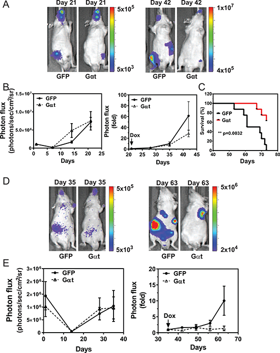 Induced Gαt expression reduces prostate cancer metastasis and increases survival.