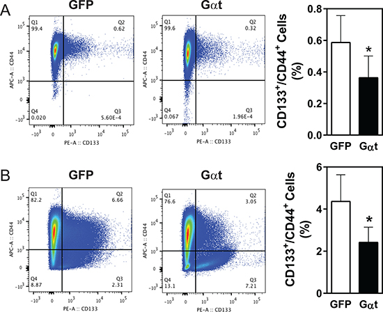 Inhibition of Gβγ signaling decreases the CD133+/CD44+ populations in PC3 cells and PC3 xenograft tumors.