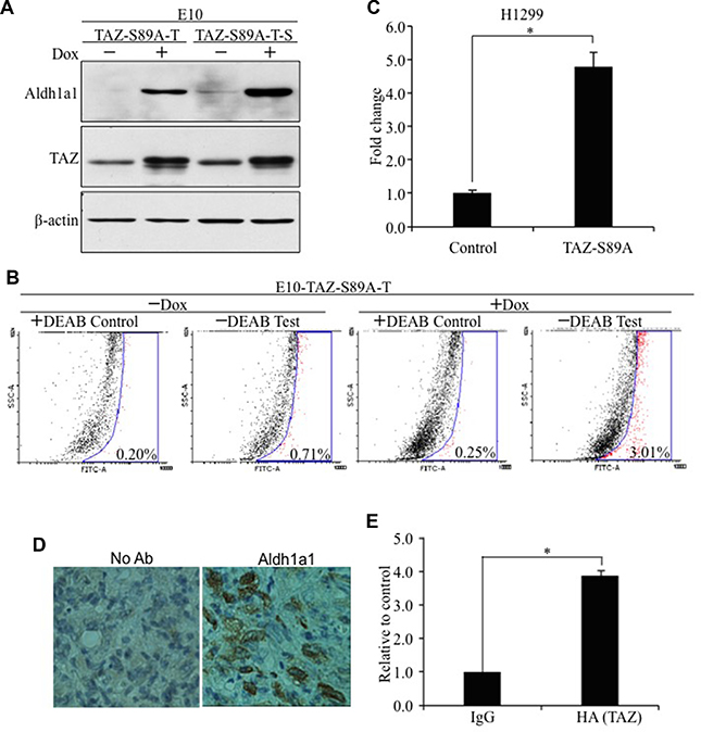 Oncotarget | TAZ induces lung cancer stem cell properties