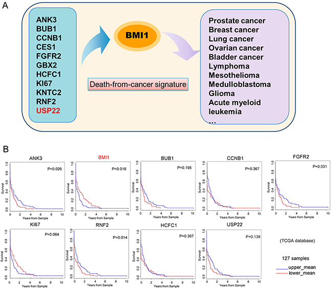 GC patient survival plots of 'death-from-cancer' genes.