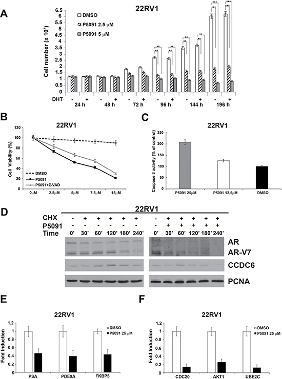 The USP7 inhibitor P5091 shows antiproliferative effects, affects CCDC6, AR and V7-isoform half lives and impairs androgen-responsive genes expression in 22Rv1 cells.