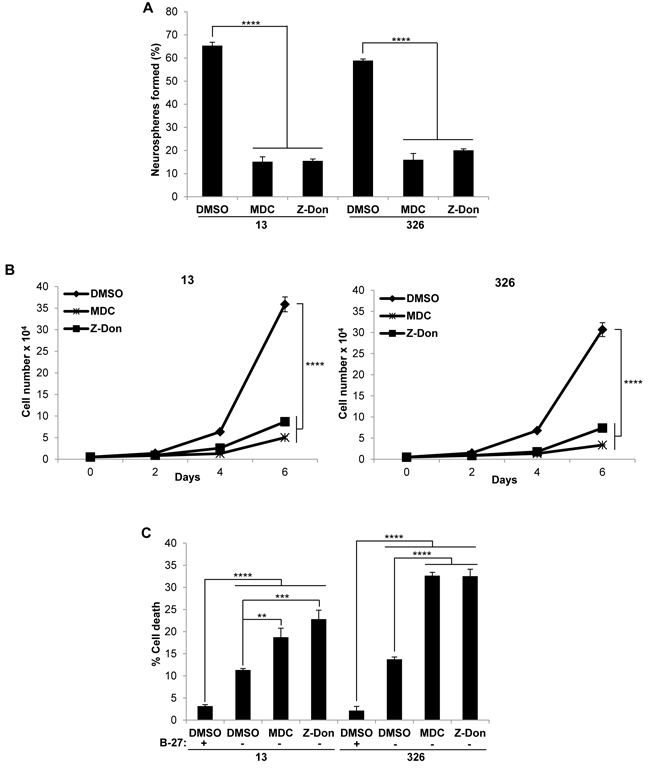 Pharmaceutical inhibitors of tTG impact the self-renewal, proliferation and survival of MES GSC.