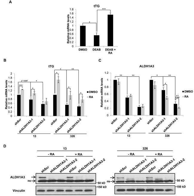 ALDH1A3 is necessary for tTG expression in MES GSCs.