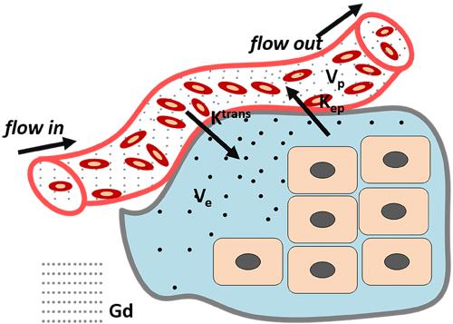 Tofts Model: classical DCE-MRI model.