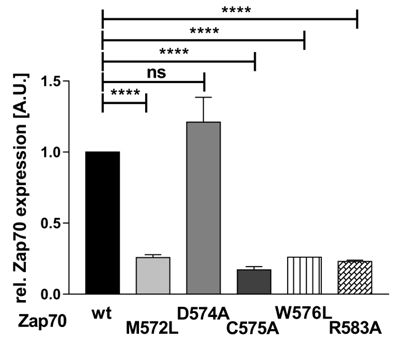 Expression of Zap70 is regulated by the Mx