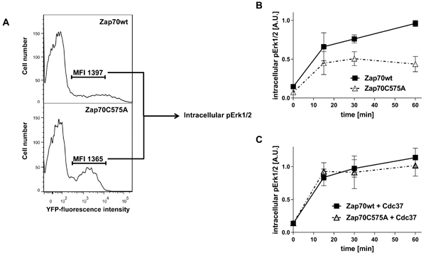 Analysis of Zap70 function.