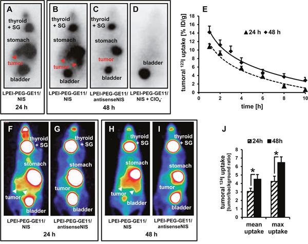 In vivo imaging of NIS-mediated iodide uptake.