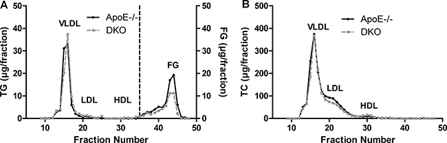 Reduced fasting FG concentrations in DKO mice.