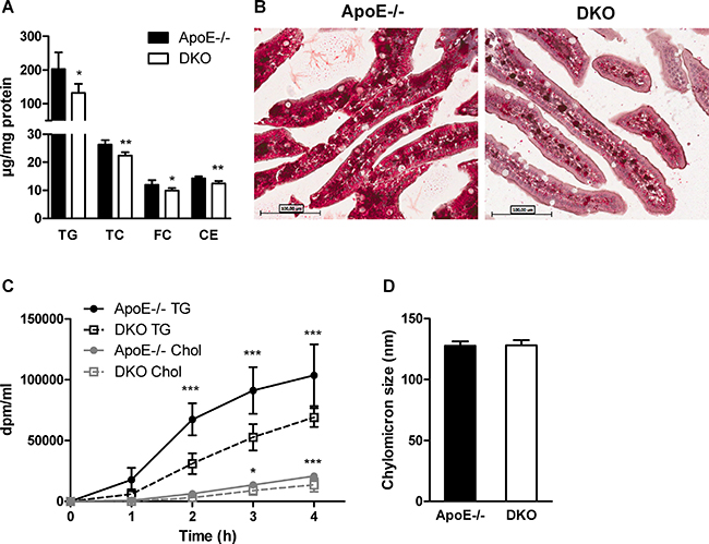 Delayed chylomicron secretion in DKO mice.